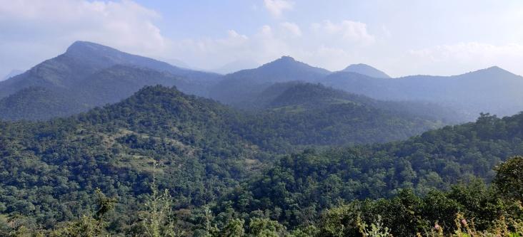 Kannan Devan Hills, Munnar Jan 2020
